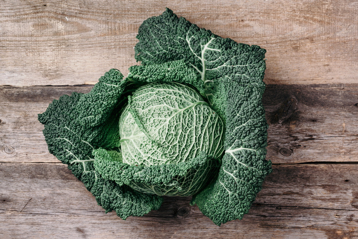 Brassica oleracea var. sabauda chou de savoie chou de milan