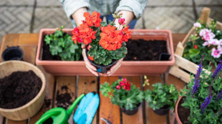 jardinière fleurs humidité